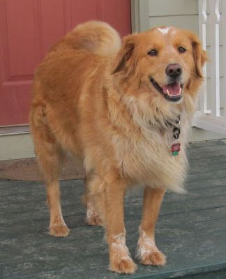 Talking Dogs At For Love Of A Dog Really Big Dogs Dogs Cute Dogs