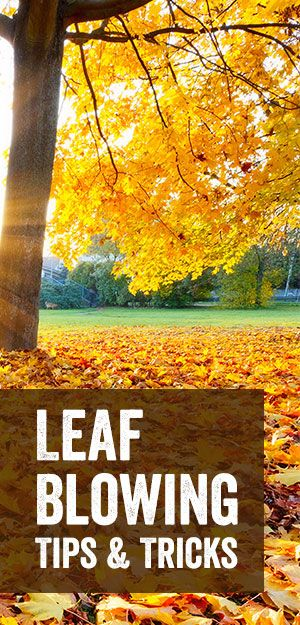 fall is here and so are the leaves make leaf clean up more