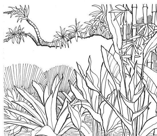 2o awesome jungle coloring pages http procoloring com awesome jungle coloring pages