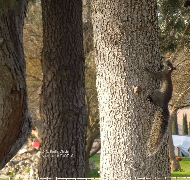 Squirrel On Oak Lane In Paso Robles With Images Squirrel