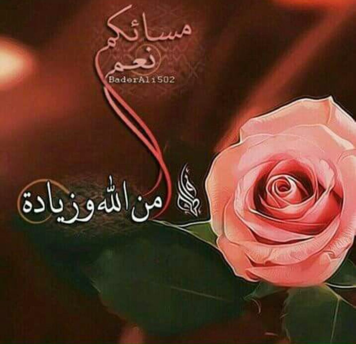 مساؤك نعم Rose Flowers Plants