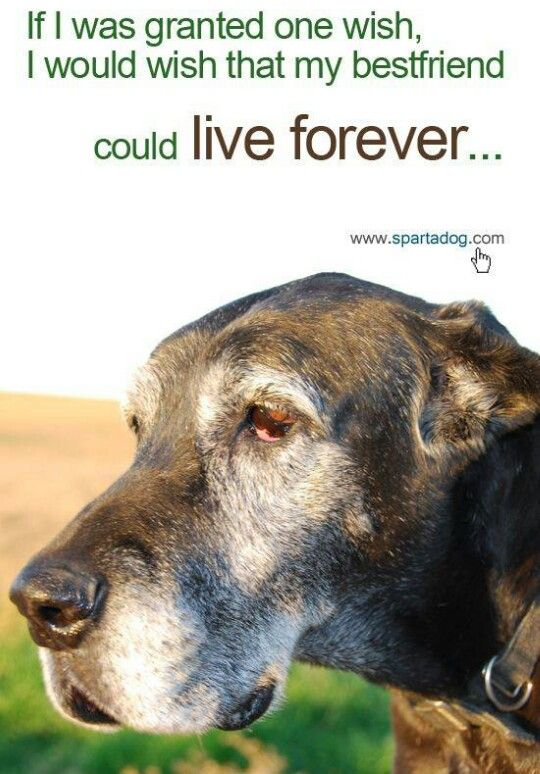 if i was granted one wish i would wish that my best friend could live forever love you owie