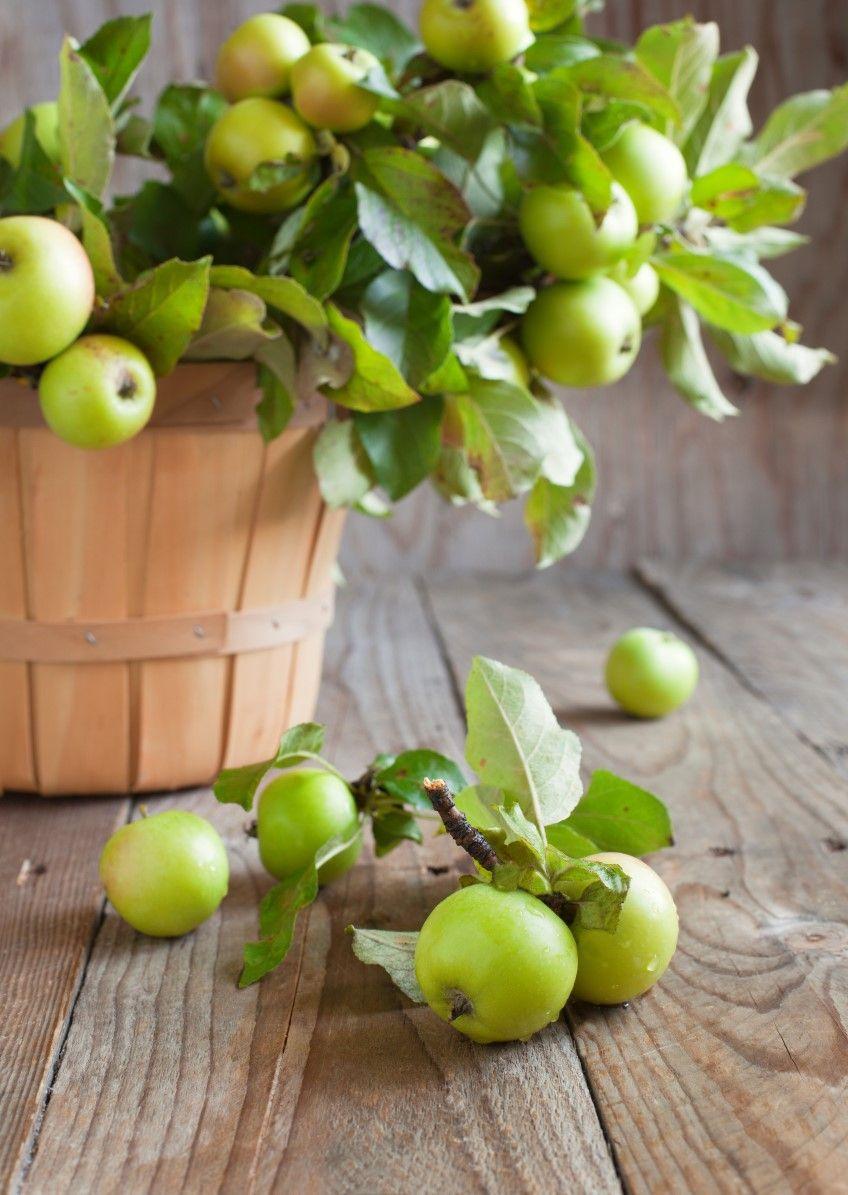Apples Apple tree, Free plants, Apple