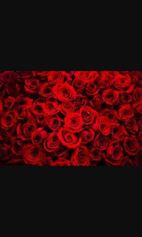 Pin by Antonia Nitescu on FLORI | Rose color meanings, Red roses, Rose color