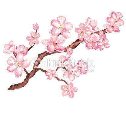 Watercolor Branch Blossom Sakura Cherry Tree With Flowers Isolated Tree Drawing Cherry Blossom Branch Tree Illustration