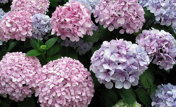Plantas y flores perfectas para jardines de interior | Jardinería ...