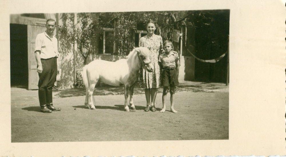 #Photograph #Snapshot #Vintage Black & White: #Family #Pony Boy Yard Dress 1930's http://www.ebay.com/itm/Photograph-Snapshot-Vintage-Black-White-Family-Pony-Boy-Yard-Dress-1930s-/371377897451?pt=LH_DefaultDomain_0&hash=item5677d8ffeb&utm_content=buffercae52&utm_medium=social&utm_source=pinterest.com&utm_campaign=buffer #farm #horse