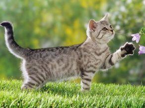 Ziua internațională a pisicilor, sărbătorită în toată ... |Ziua Internațională A Pisicii