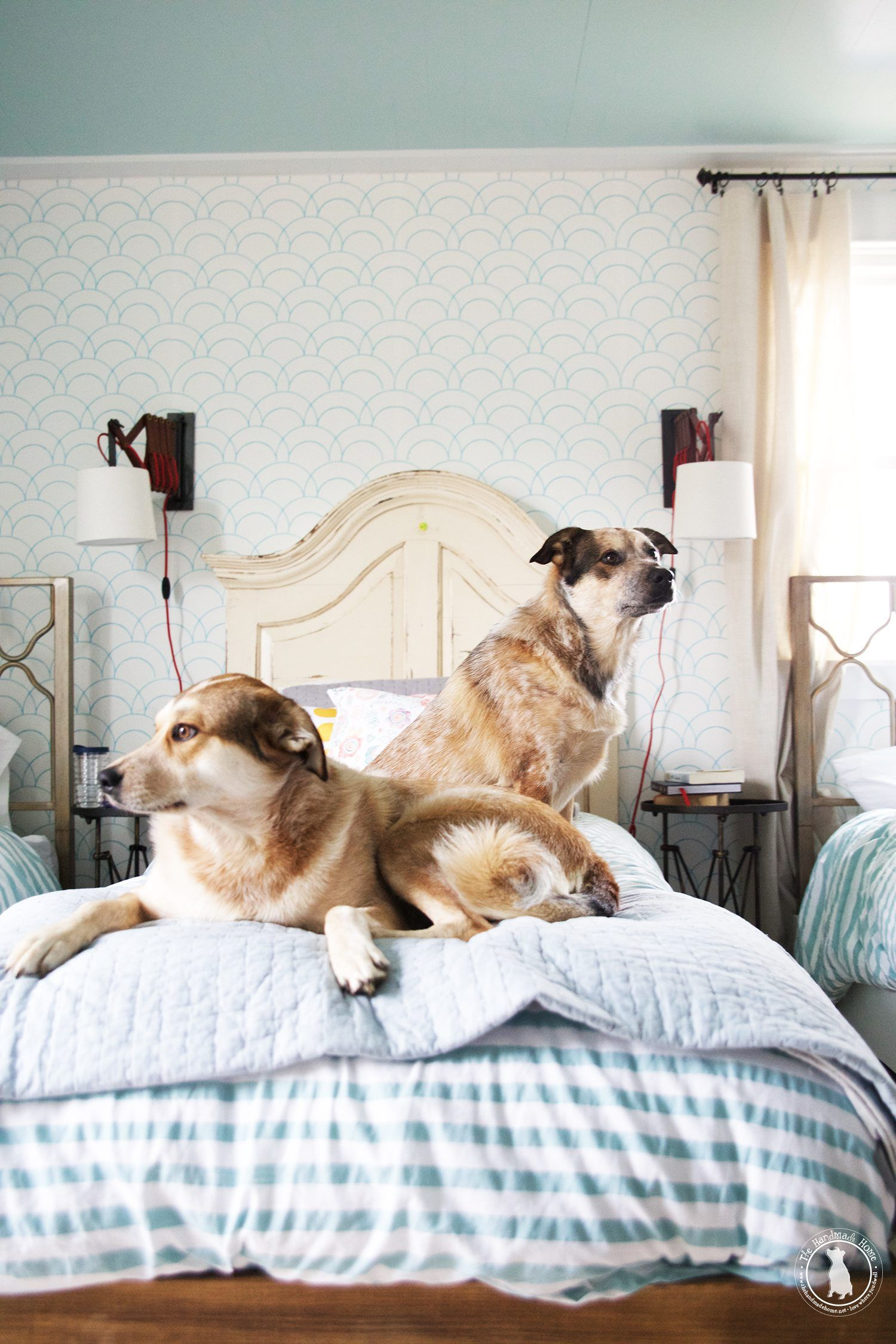 How To Keep Your House Clean With Two Massive Dogs The Handmade Home Massive Dogs Dogs Dog Cleaning
