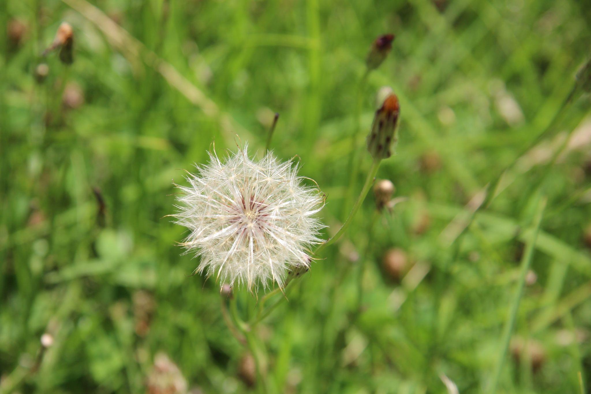 Seed Flower by Charissa Lotter (de Scande) by Charissa Lotter (de Scande) on 500px