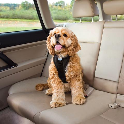 Tru Fit Smart Dog Seat Belt Harness With Seatbelt Tether In 2019