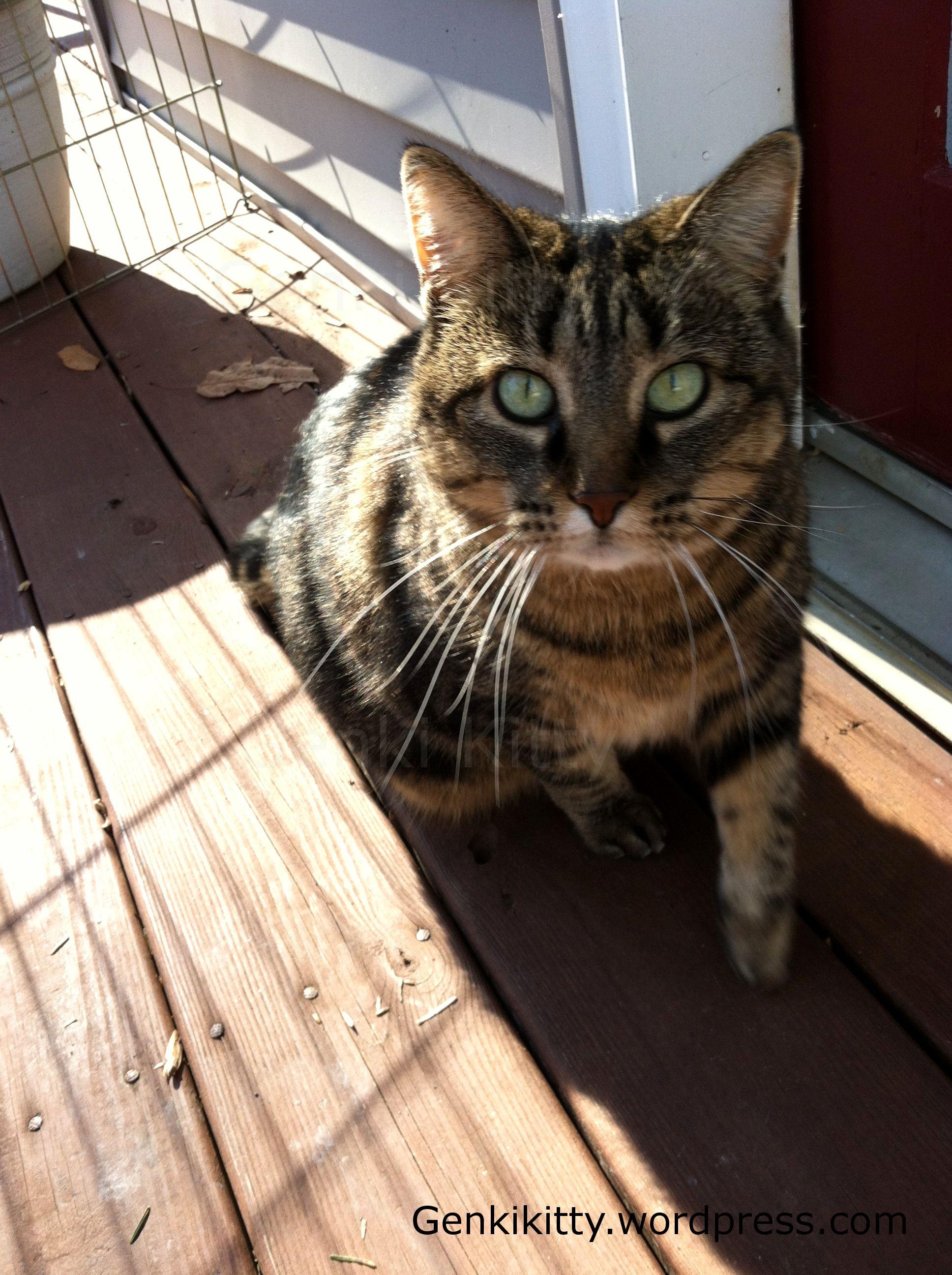 Genki Kitty enjoying the sunshine outside with me. She's