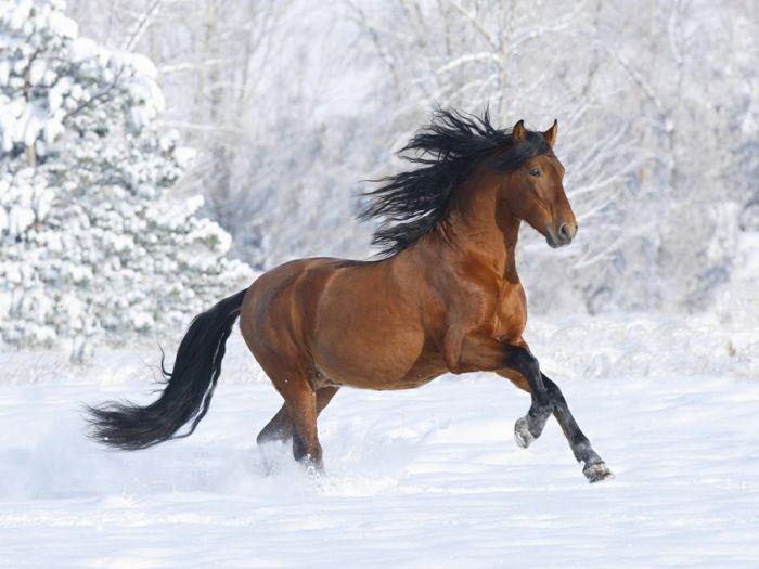 braunes pferd im schnee pferde pinterest braunes pferd schnee und pferde. Black Bedroom Furniture Sets. Home Design Ideas