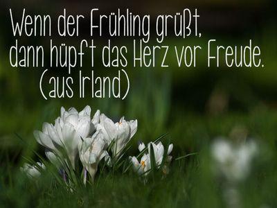 Pin Von Mops1954 Auf Zitate Gefuhle Lebensweisheiten Fruhling Spruche Weise Worte Fruhling Zitate