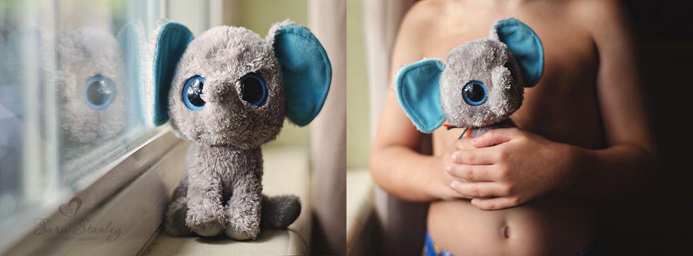 Peanut the elephant photo