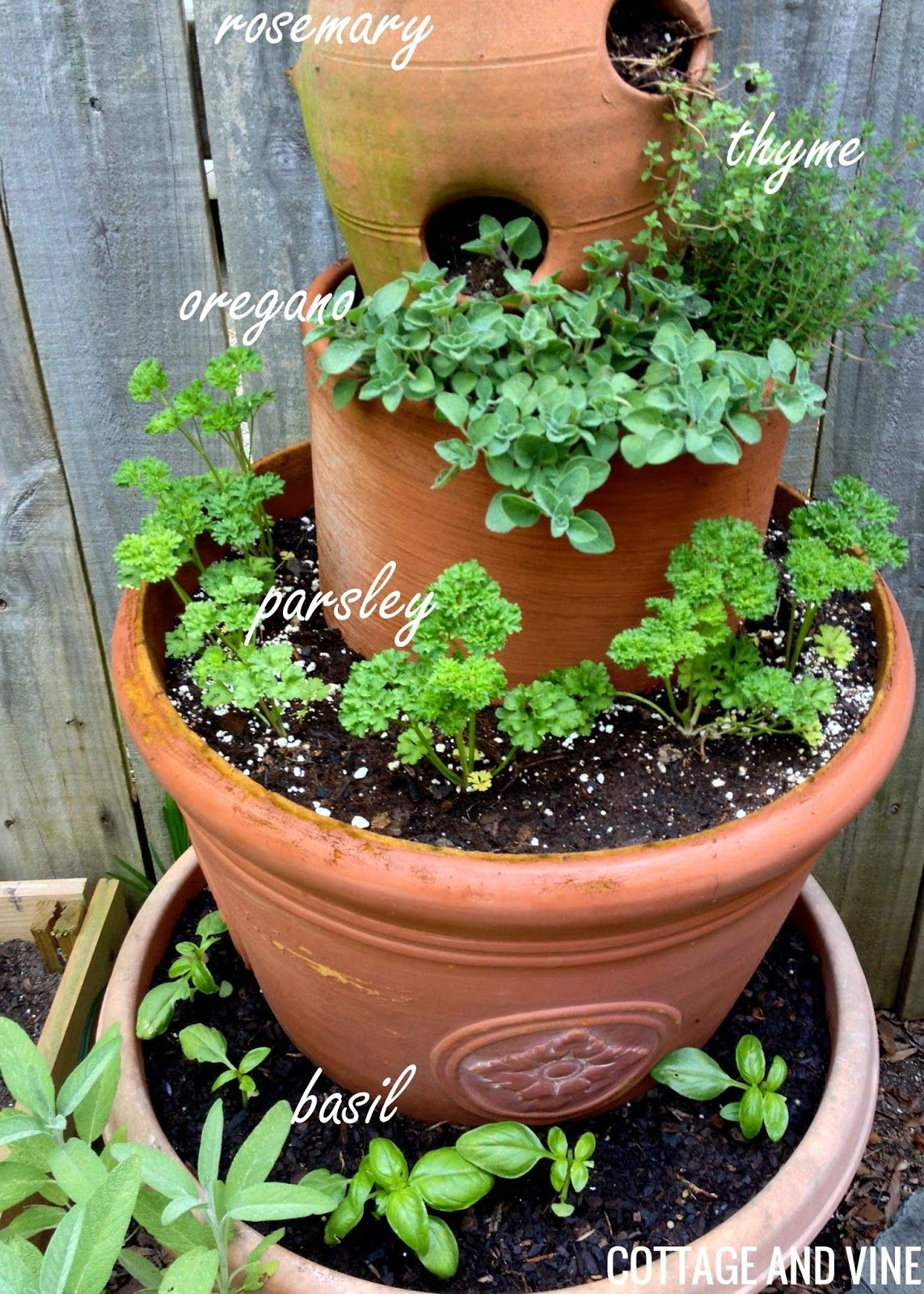 COTTAGE AND VINE: An Herb Tower Update