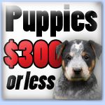 Under 300 Lancaster Puppies Puppies For Sale Lancaster