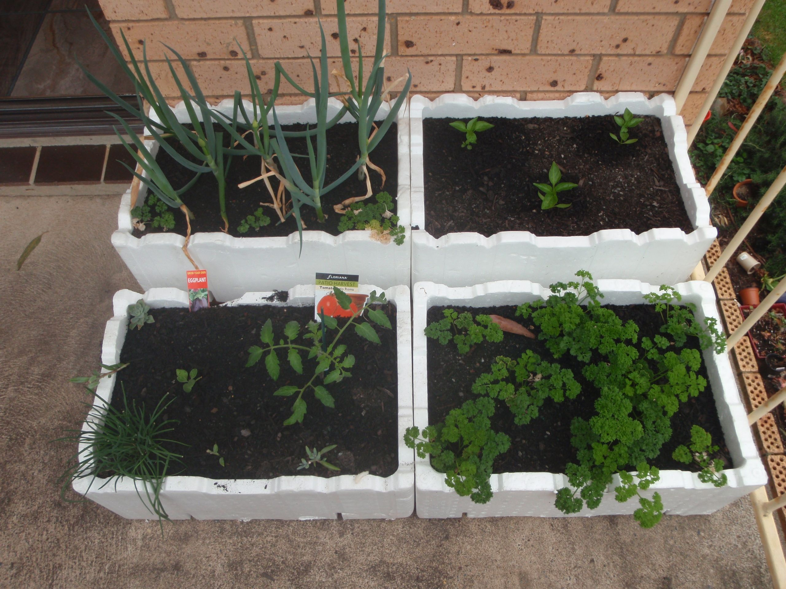 Recycling Balcony Veggies And Herbs In Recycled Foam Fruit Boxes