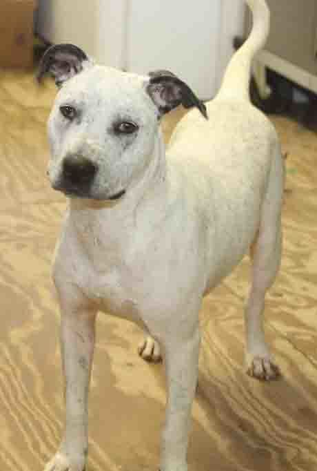 Adopt Dexx on Animals, Animal rescue, Dog mixes