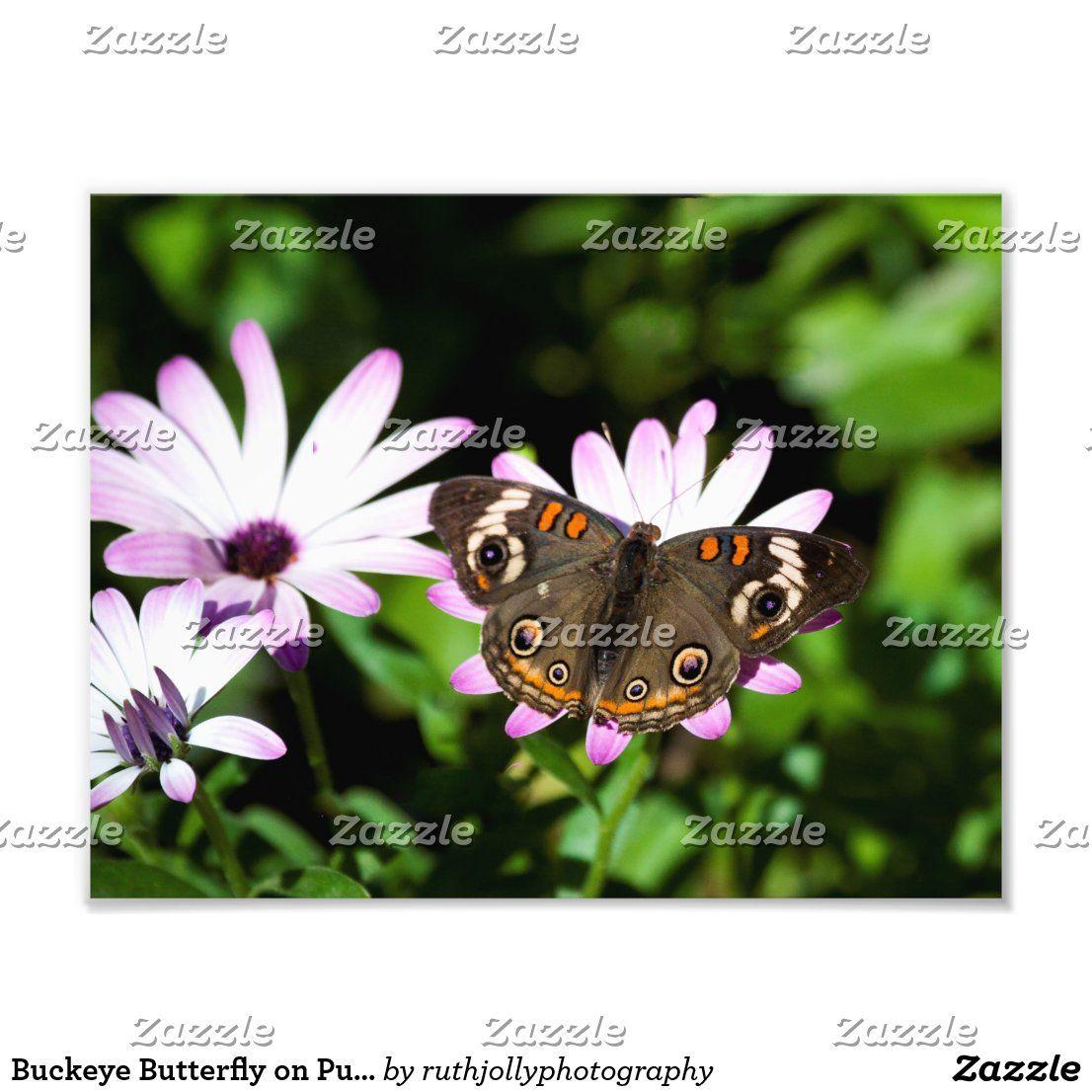 Buckeye Butterfly On Purple Flowers Photo Print