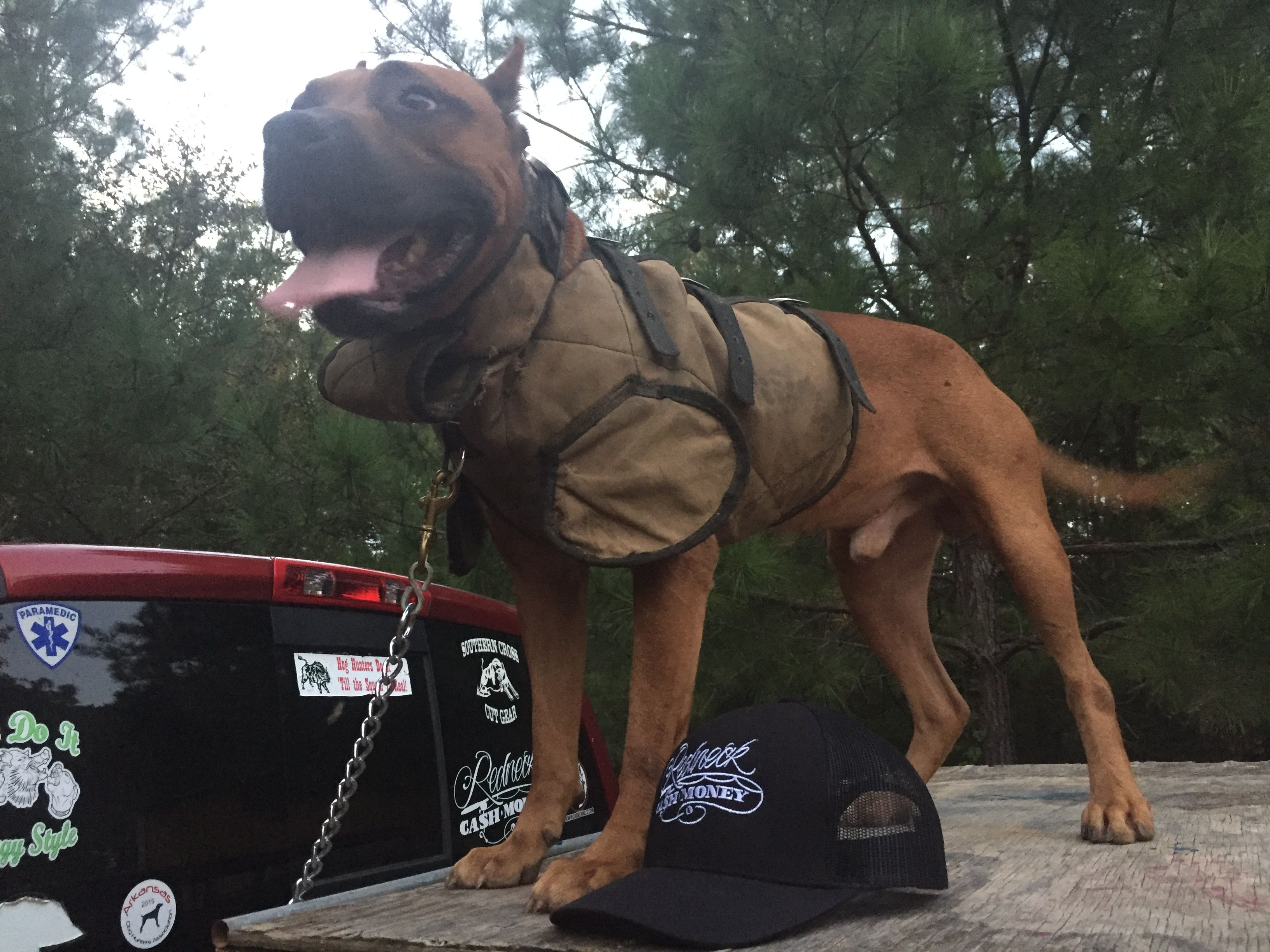 Pin On Hog Dog Cut Vest