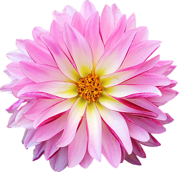 pinterest dahlia free image on pixabay dahlia flower pink yellow mightylinksfo Image collections
