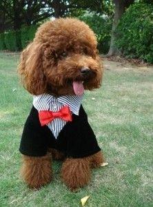 Formal Wear For Pets Trajes Para Perros Ropa Para Perros Perros