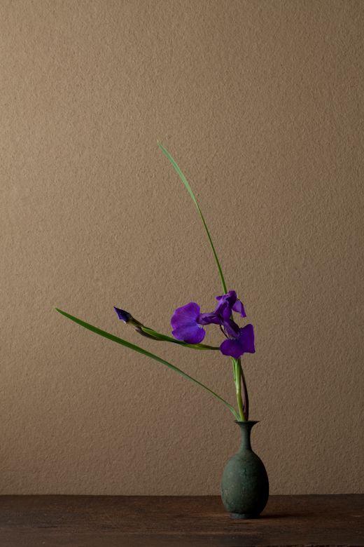 一日一花 川瀬敏郎: 2012年6月6日(水) あでやかで、さわやか。昔は杜若にくらべて物足りないと思っていたのですが。 花=菖蒲(アヤメ) 器=青銅王子形水瓶(六朝時代)