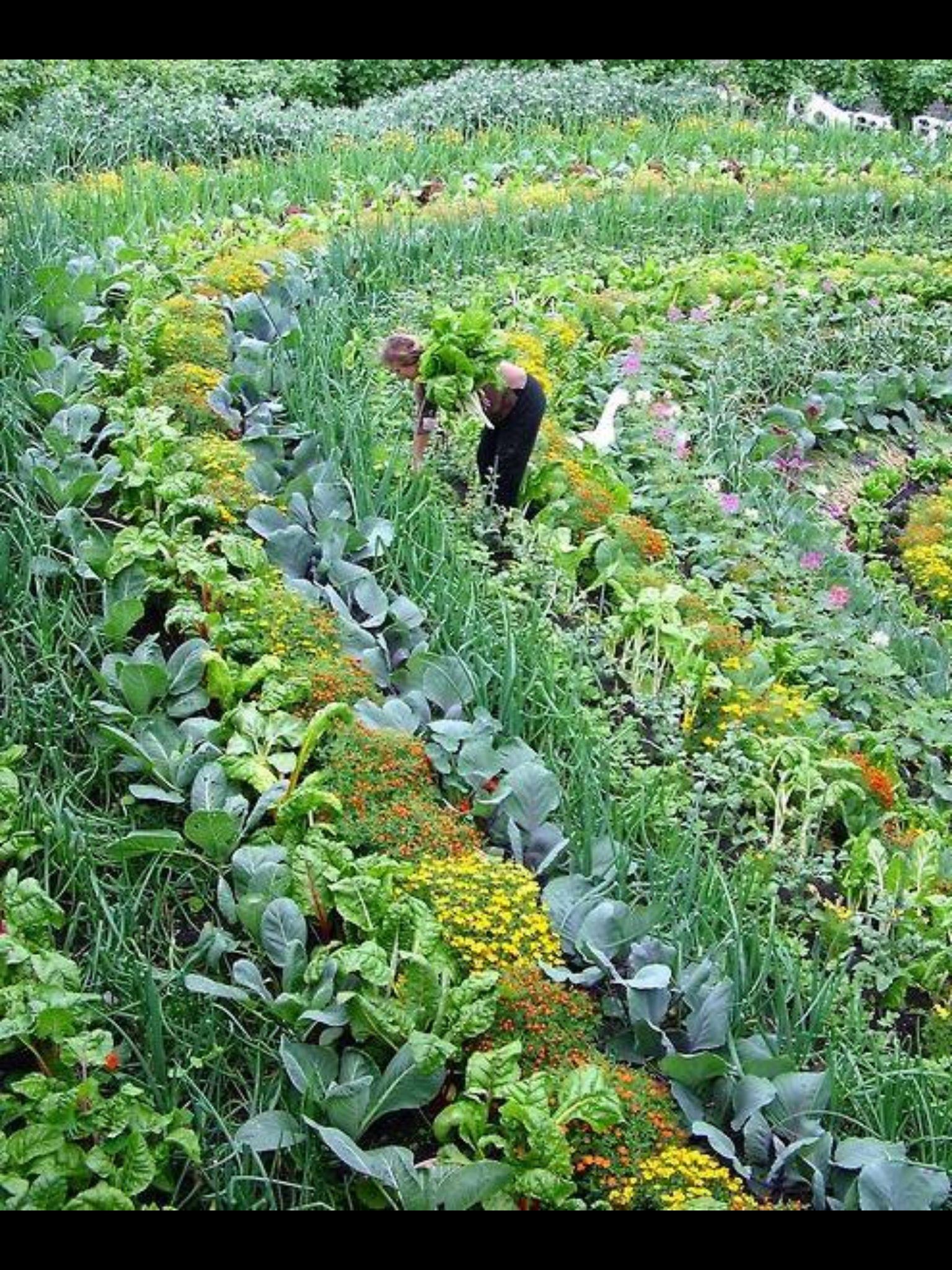 Permaculture Garden | Plants, Permaculture gardening ...