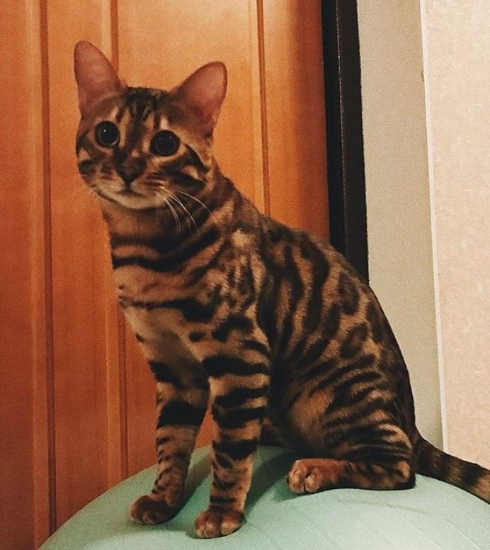 200 Striped Cat Names Striped Cat Tabby Cat Tabby Cat Pictures