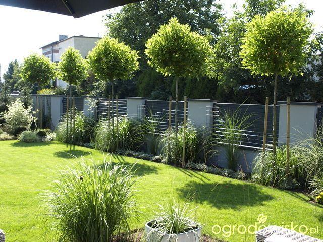 Tu ma być ogród :) - strona 1139 - Forum ogrodnicze - Ogrodowisko - #być #Forum #landscape #ma #ogród #ogrodnicze #Ogrodowisko #strona #Tu #sichtschutzterasse