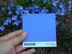 Pix For Periwinkle Pantone Color Pantone Pantone Color Blue Colour Palette