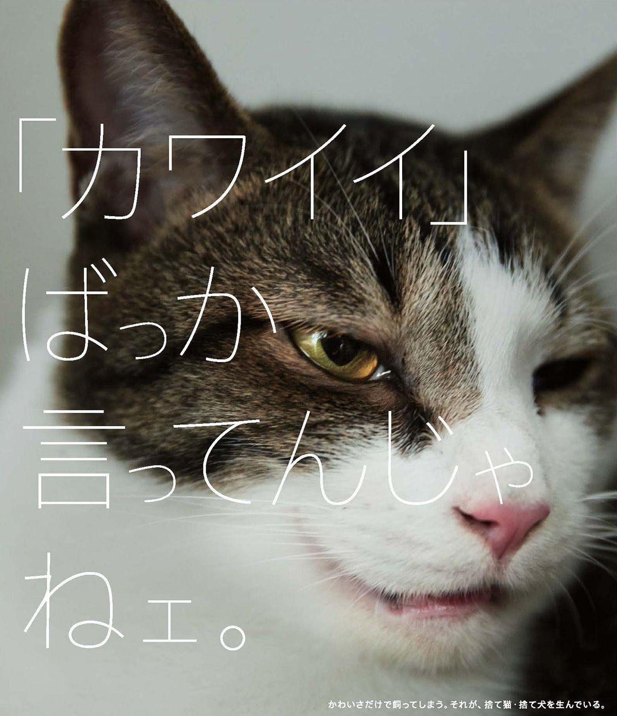 捨て犬 捨て猫問題がテーマ 新聞広告クリエーティブコンテスト 入賞作品発表 宣伝会議 Advertimes アドタイ 日本のグラフィックデザイン 捨て猫 子猫