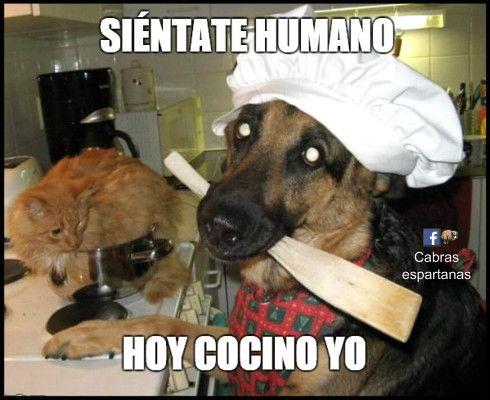 Hoy Cocina El Perro Memes Perros Humor De Perros Fotos De Perros Graciosas