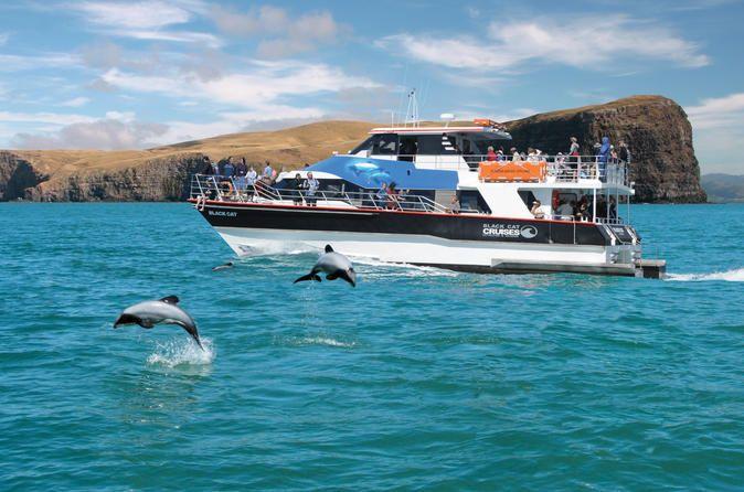 Akaroa Harbour Nature Cruise Experience majestic scenery ...