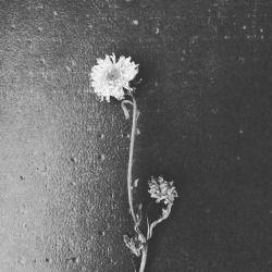 #fermuniz #inspiration #inspire #atelierdefer #fiorisecchi #biancoenero #momenti
