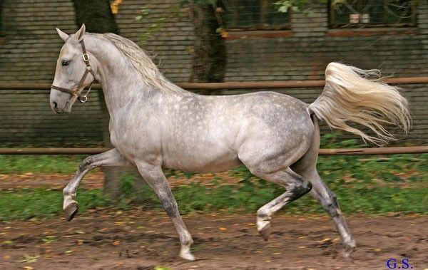 Топ-25 самых красивых лошадей мира | Фотографии лошадей ...