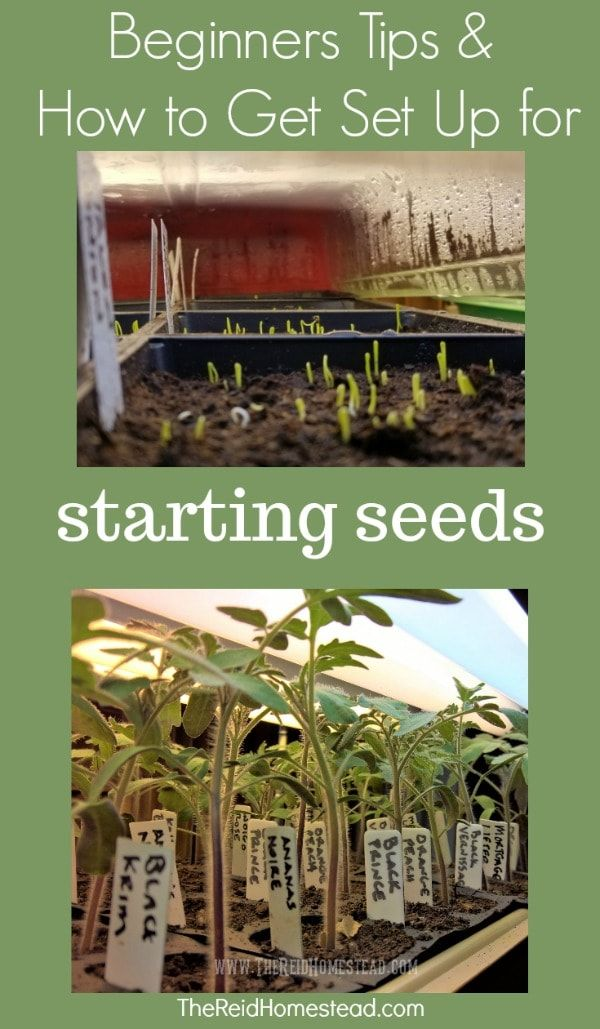 Beginner Tips and Tricks for starting seed along with my Essential Seed Starting Equipment Guide part of my Seed Starting 101 Guide Learn how to start your own seed succe...