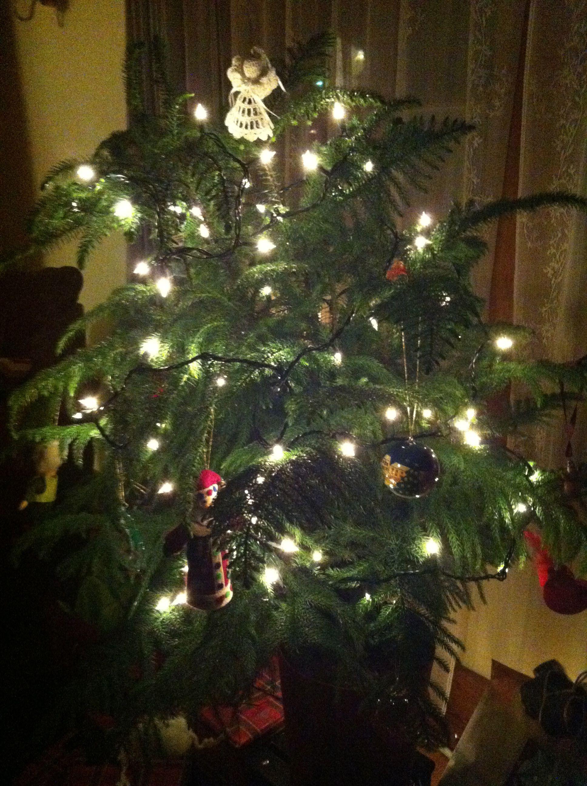 Norfolk Island Pine Christmas Tree | Flowers | Pinterest | Christmas ...