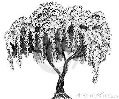 Sakura Tree Pencil Sketch Tree Sketches Tree Pencil Sketch Tree Drawing