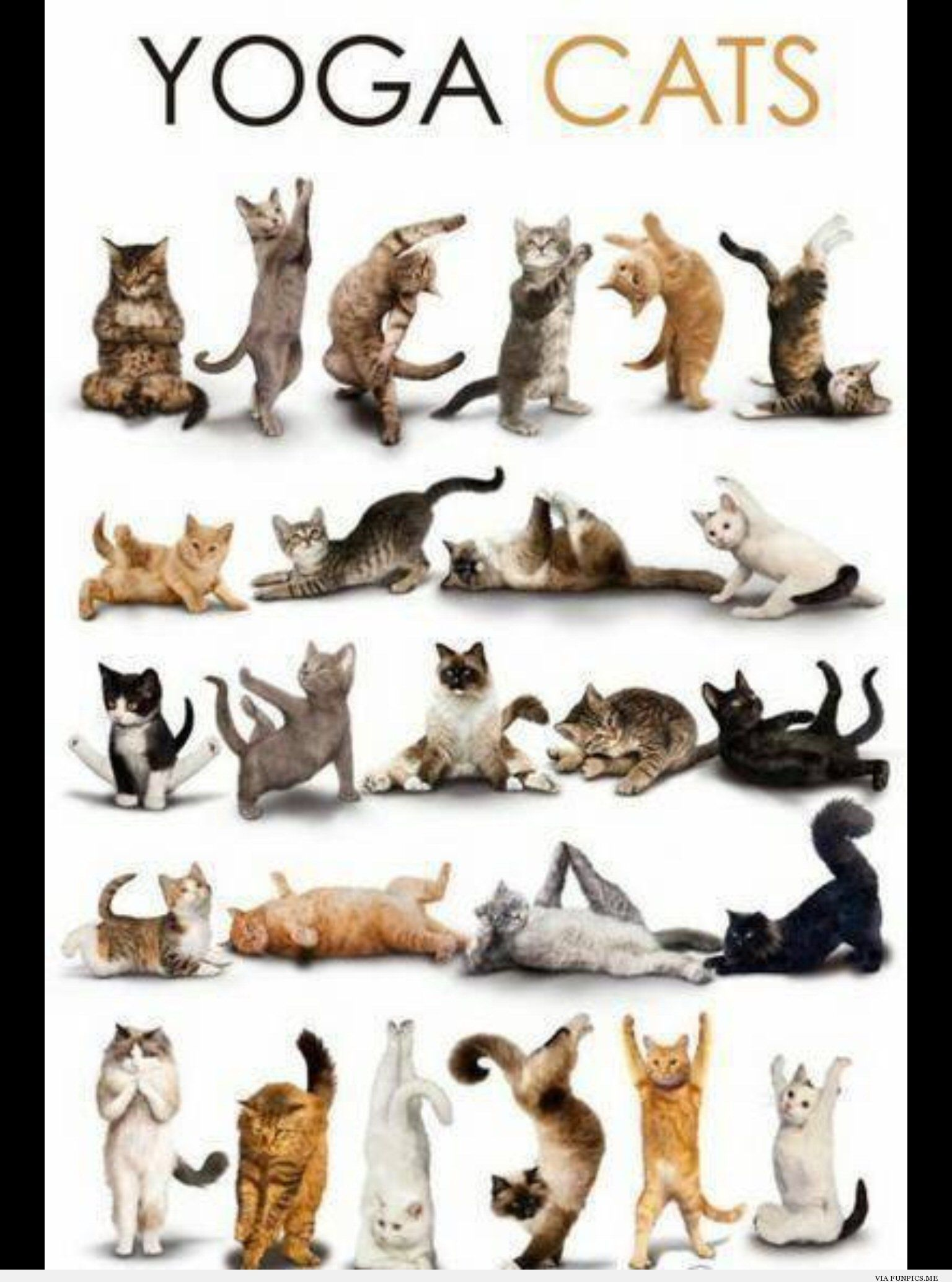 cool Cats are the greatest inspiration for yoga