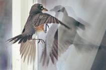 Risultati immagini per bird crash window stickers