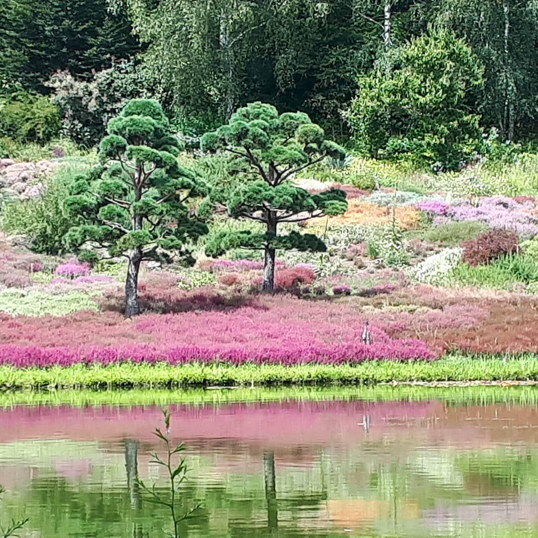 Nepal Himalaya Garten Wiesent Regensburg Bayern Ausflug Ein Schoner Garten Mit Vielen Neuen Eindrucken Ein Ort Zum Verweilen Gartenliebe Stauden Garten