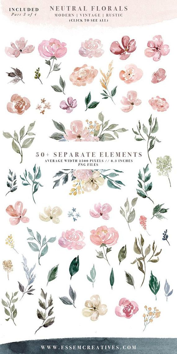 Neutral Wedding Flower Clipart, Watercolor Background, Rustic ...