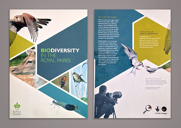 Biodiversity-in-The-Royal-Parks-Beautiful-Brochure-Design-Example - brochure design idea example