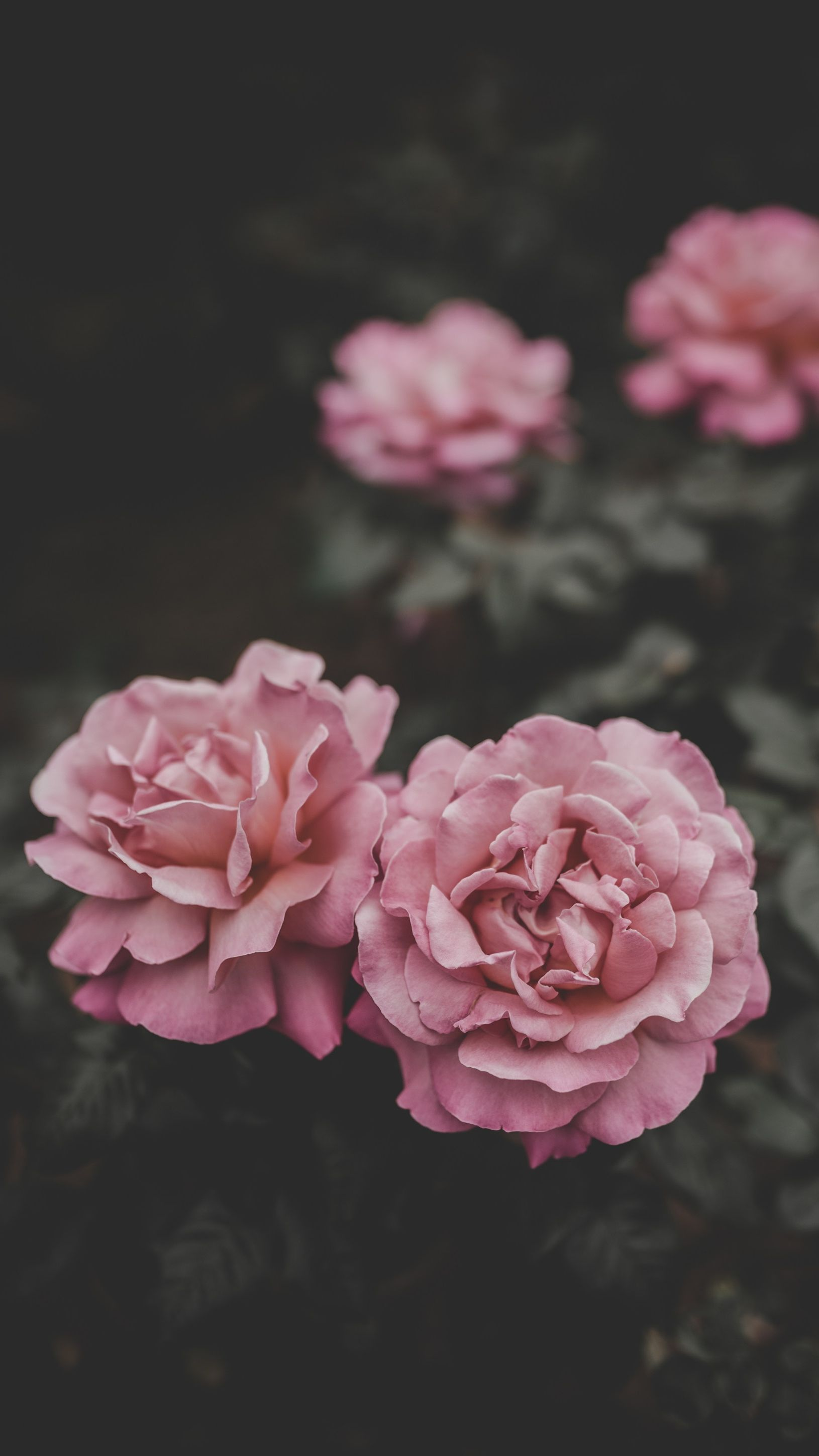 Download Wallpaper Flower Iphone HD