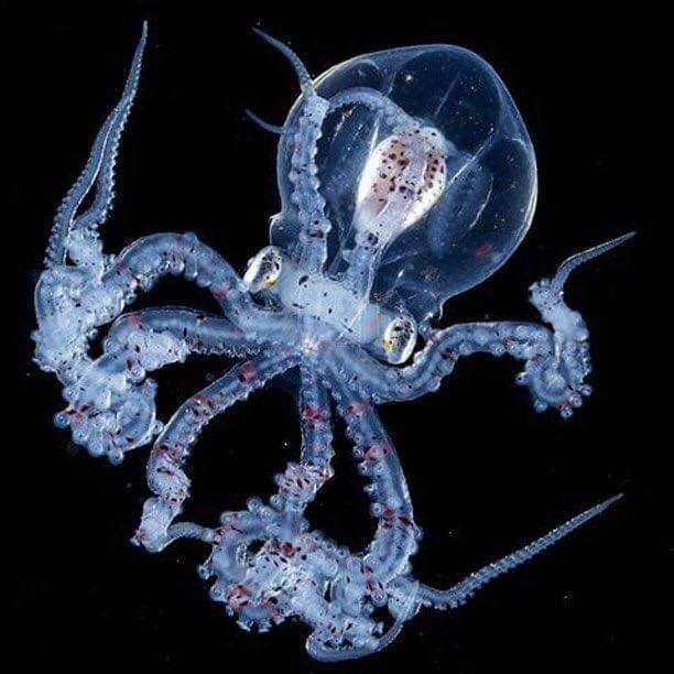 octopus full movie hindi dubbed