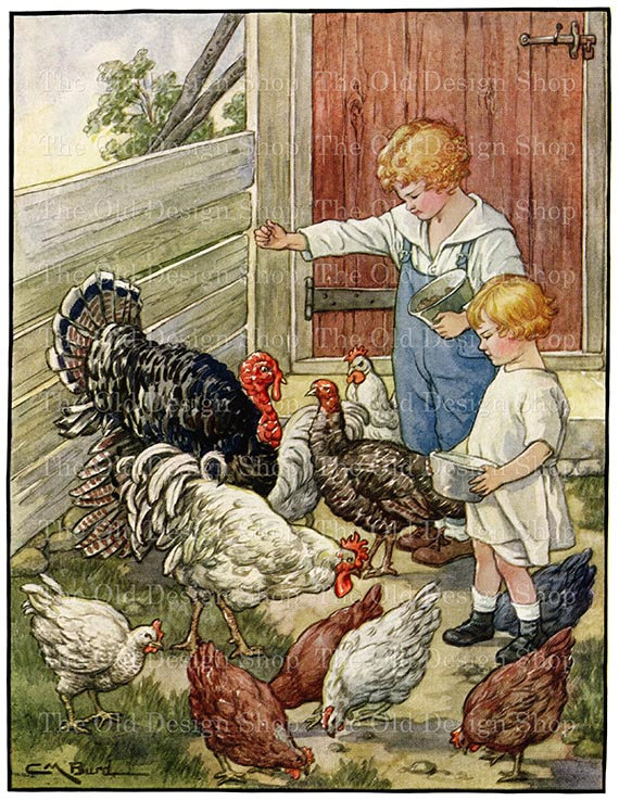 картинки кормят цыплят эти картинки
