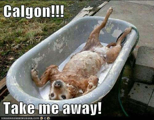 62 Best Calgon Take Me Away images   Take my, Homemade flea ...