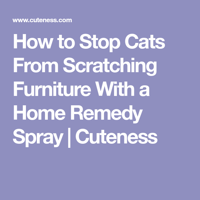 How To Stop Cats From Scratching Furniture With A Home Remedy